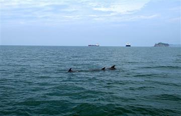 Una manada de delfines dejó impactados a los turistas en Santa Marta