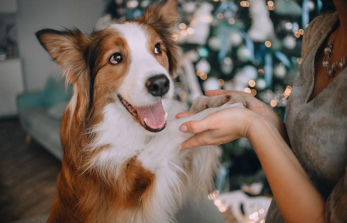 Cuidar el pelo de tu mascota, ayuda que lo mantenga siempre suave, sedoso y brillante. Foto: Shutterstock
