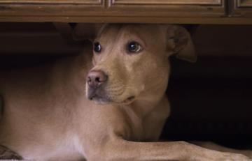 Abusado y empalado: Así fue hallado el cuerpo de un perro en Bogotá