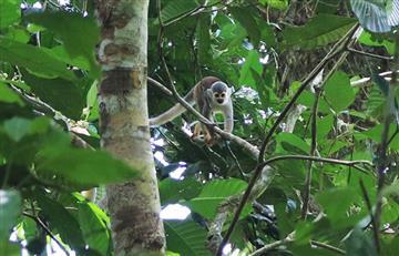 [FOTOS] San José del Guaviare, donde El Llano se encuentra con la selva