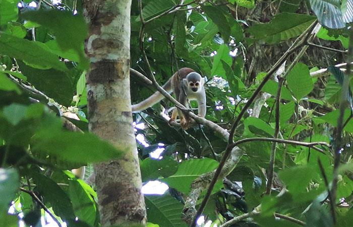 San José del Guaviare, un destino con ecosistemas únicos. Foto: Luis Plata - Colombia.com