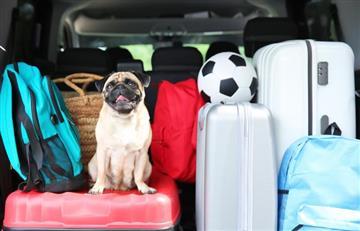 Estos son los 'tips' que debes conocer para poder viajar con tu mascota