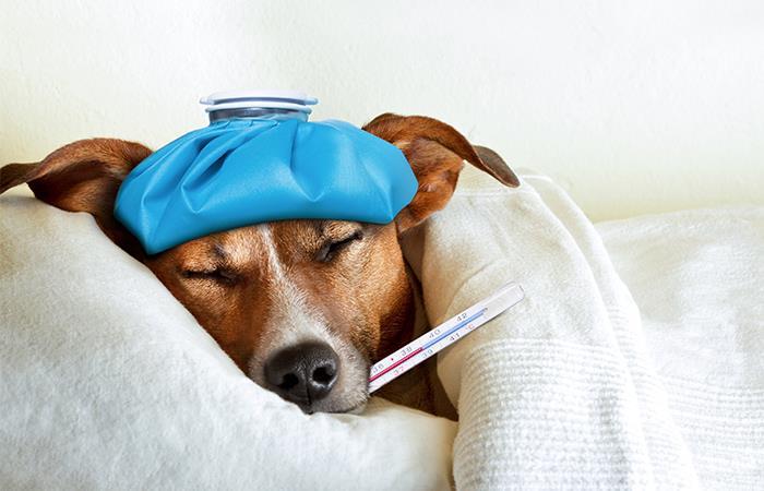 A los perros también les da gripa