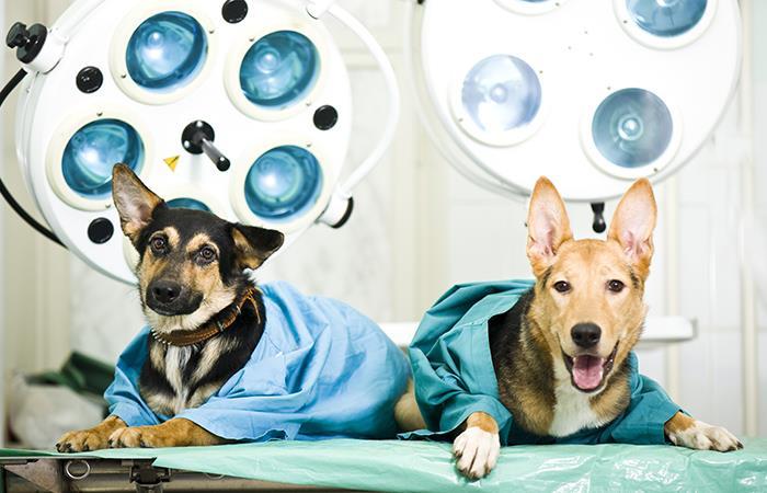 Por qué esterilizar a mi mascota
