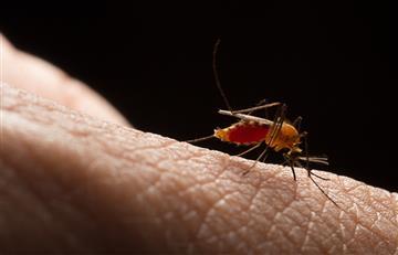 Chagas, una enfermedad silenciosa que puede ser letal