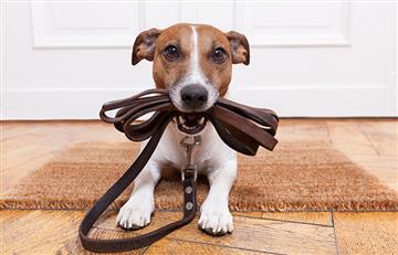 Los errores más comunes de las personas a la hora de criar un perro