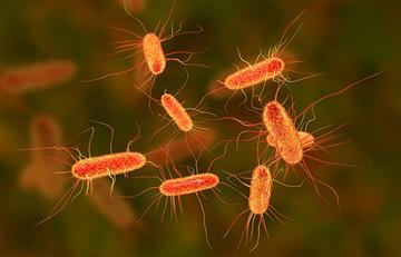 Antibióticos en industria agroalimentaria aumentan resistencia antimicrobiana