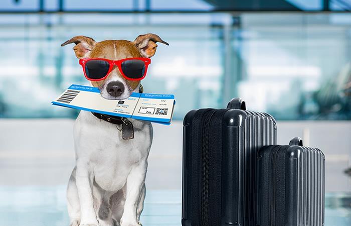 Viajar: con mascotas Navidad