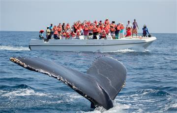 Muere ballena que tenía 100 kilogramos de basura en su estómago