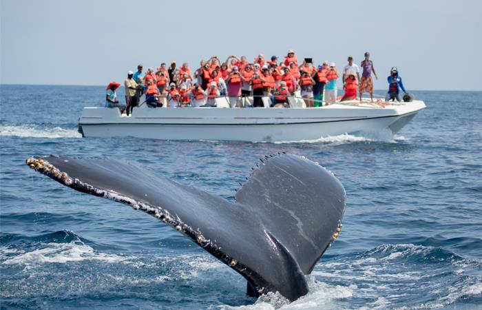 Las ballenas se ven gravemente perjudicadas por la contaminación de los mares. Foto: Shutterstock
