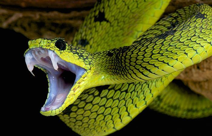 Significado de soñar con serpientes