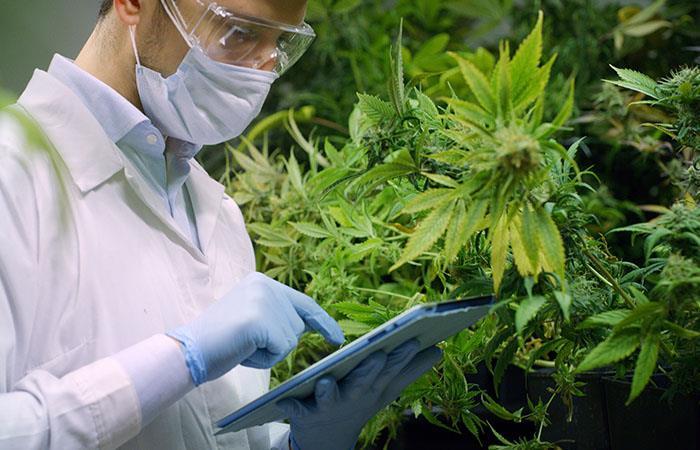 Qué países aprueban la venta de medicamentos a base de marihuana
