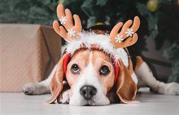 ¡El mejor regalo de Navidad es un peludo lleno de amor!