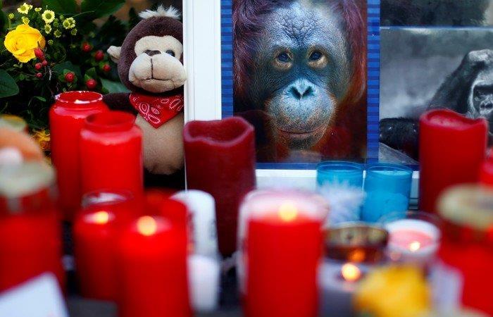 En el hecho murieron varias especies de primates. Foto: Twitter