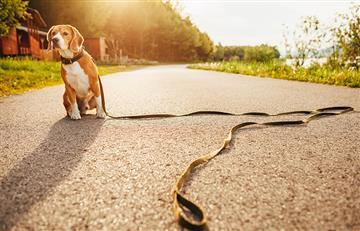 [VIDEO] Esto es lo que debes hacer si tu mascota llega a perderse