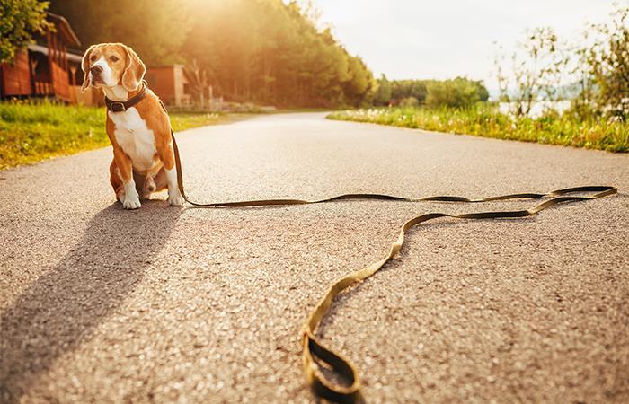 Como encontrar mascota perdida