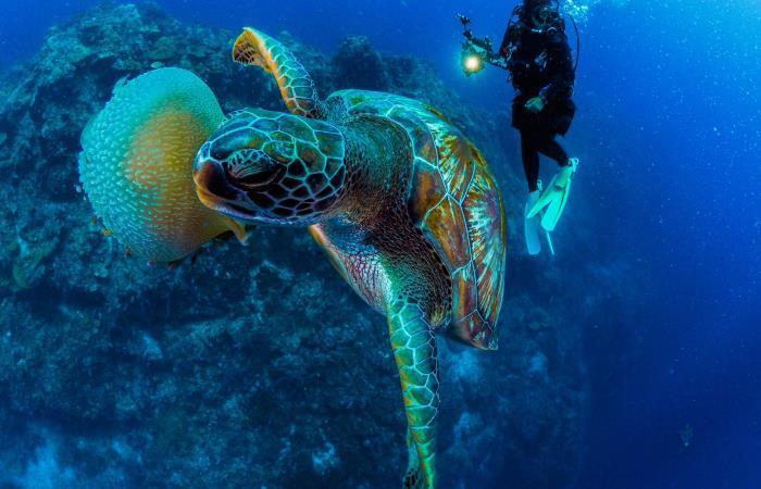 Ecología: acidificación océano peces