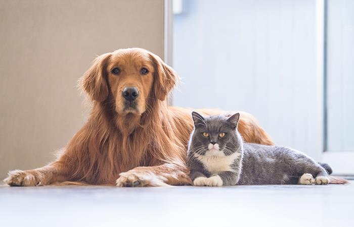Esterilización gratis mascotas bogotá