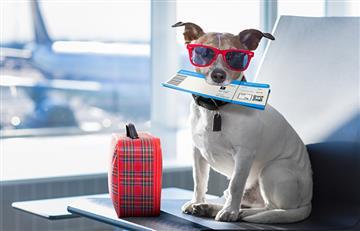 En época de vacaciones, las mascotas también viajan