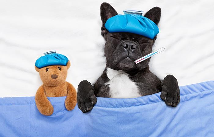 Salud mascotas comida fin de año