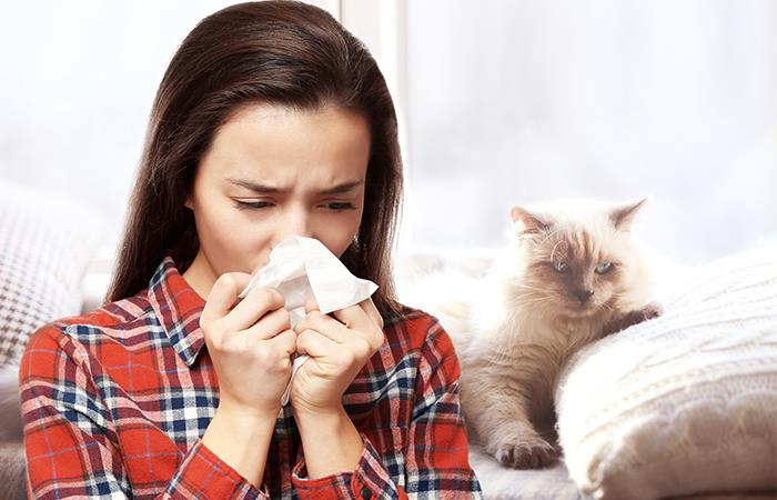Solución alergia mascotas