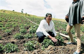 "Heladas: Fedepapa informó que 70 municipios están por ""perder sus cosechas"""