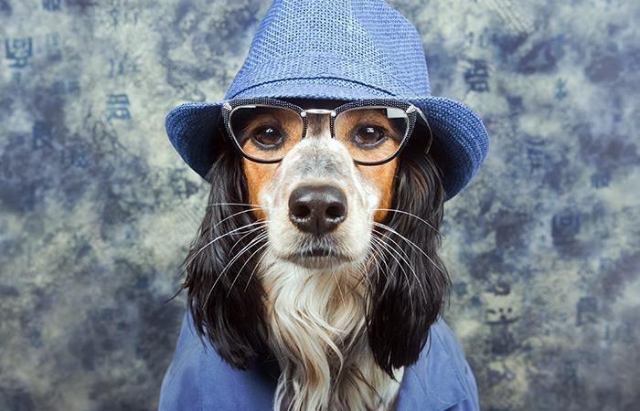 Estas son las consecuencias de humanizar a tu mascota. Foto: Shutterstock