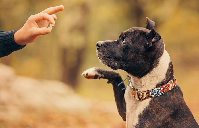 perros cooperan recompensas como lobos