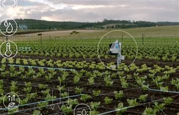 Inteligencia artificial: el nuevo aliado del agro colombiano