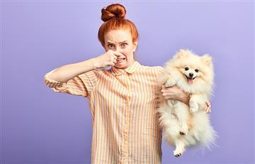 Combate el mal olor de tu mascota con estos 7 trucos