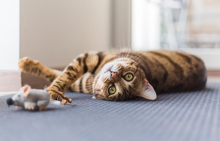 Gatos reducen miedo ratones