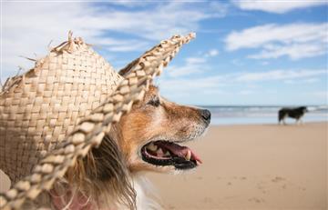 Tu perro también necesita protector solar