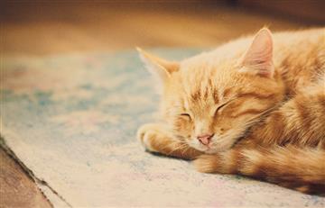 Soñar con gatos tiene un significado muy especial