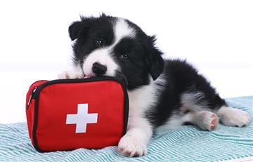 Crean primer kit de primeros auxilios para perros y gatos