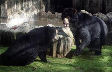 """""""Los animales no son sujetos de derechos"""": Corte Constitucional"""