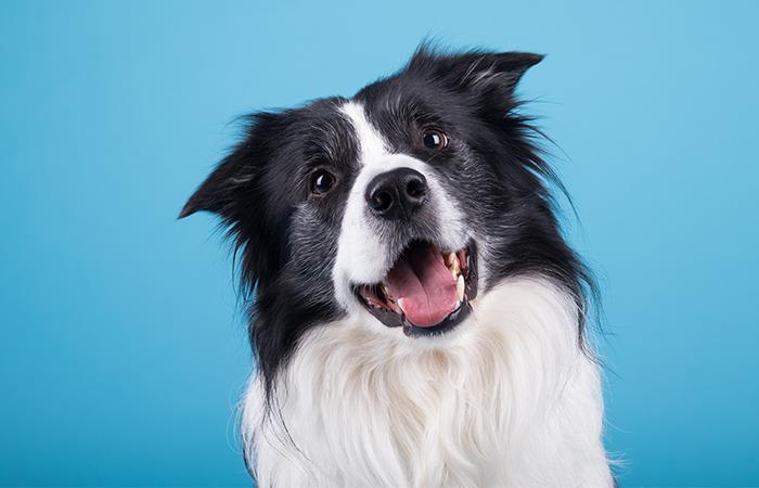 Errores comunes dueños con perros
