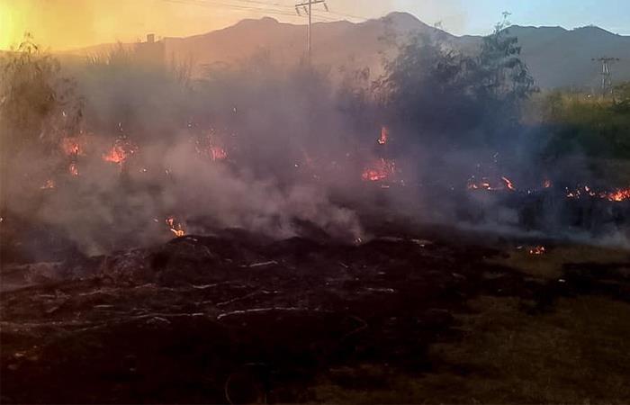 El incendio se propagó por una siembra de caña de azúcar. Foto: EFE