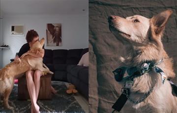 [VIDEO] Impresionante reacción de un perro ante la crisis de ansiedad de su dueña