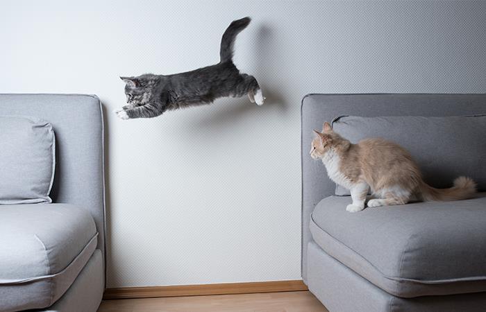 Los gatos no siempre caen de pie