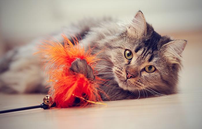 Como motivar un gato jugar
