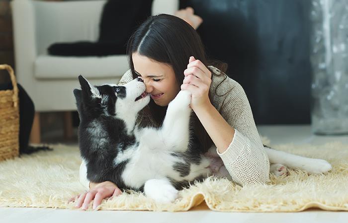 Cuidados básicos perro