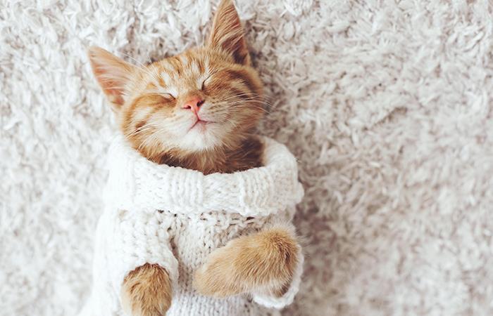 Los datos más curiosos de los gatos que te impactarán