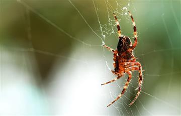 El escalofriante significado de soñar con arañas
