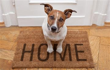 Recomendaciones para dejar a tu mascota sola en casa