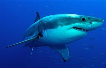 Hallan fósiles de un Tiburón blanco en Argentina