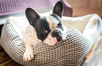 Cuidado, los ronquidos de tu mascota no siempre son algo normal