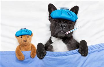 Los perros y los gatos también sufren de diabetes