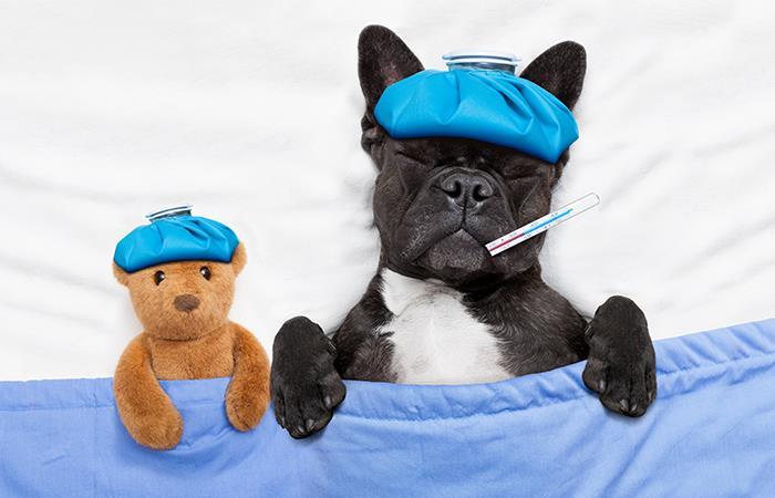 Diabetes en perros y gatos. Foto: Shutterstock