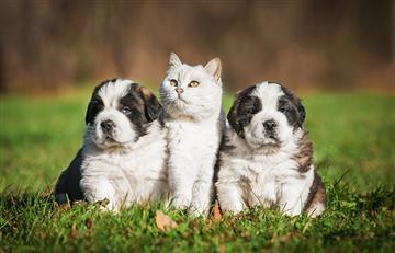 Cuida los oídos de tu mascota, aquí te decimos cómo