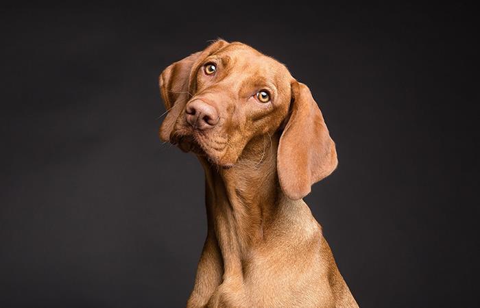 Como entender qué quiere decir perro